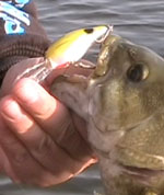 susquehanna river fishing