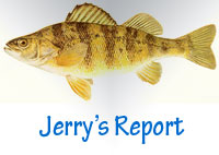 Jerry's Yellow Perch Fishing Report